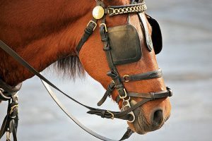 A horse with blinkers