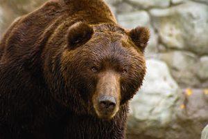 bear-commons