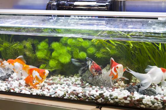 A fish tank